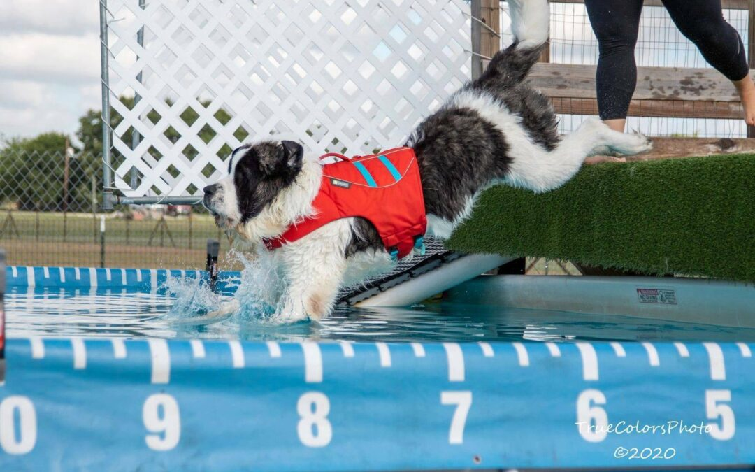 Deb Jones, PhD: Good Traits for a Sports Dog (and Pet)