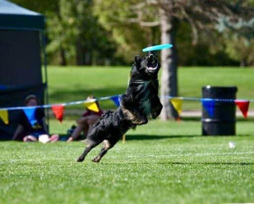 Julie Norman Jenkins: Breeding Dogs as Athletes and Pets