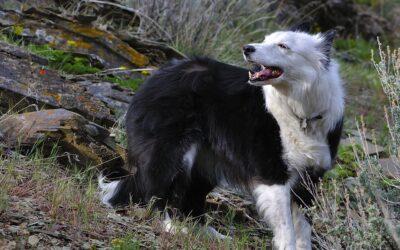 Variation in Neuroanatomy Across Dog Breeds